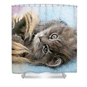 Kitten In Blanket Shower Curtain