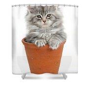 Kitten In Pot Shower Curtain