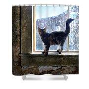 Kitten On Windowsill Of Abandoned House Shower Curtain