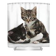 Kitten Pals Shower Curtain