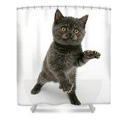 Kitten Reaching Shower Curtain