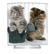Kittens And Watering Can Shower Curtain