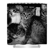 Kittens Corner Shower Curtain