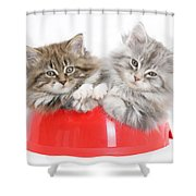 Kittens In A Food Bowl Shower Curtain