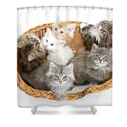 Kittens In Basket Shower Curtain