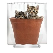 Kittens In Flowerpot Shower Curtain