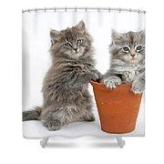 Kittens In Pot Shower Curtain