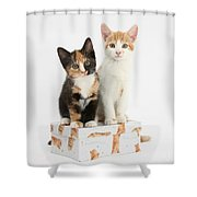 Kittens On Birthday Package Shower Curtain