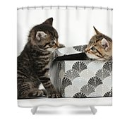 Kittens Playing With Box Shower Curtain