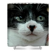 Kitty Closeup Shower Curtain