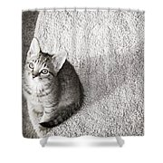Kitty's Shadow Shower Curtain