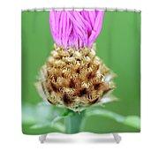 Knapweed Flower Shower Curtain