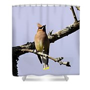 Knot Head Shower Curtain