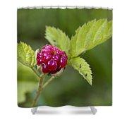 Knox Berry Farms Boysenberry Fruit Shower Curtain