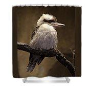 Kooky The Kookaburra Shower Curtain