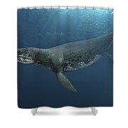 Kronosaurus Queenslandicus Swimming Shower Curtain