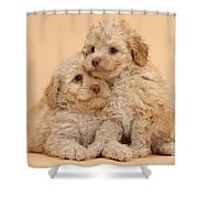 Labradoodle Puppies Shower Curtain