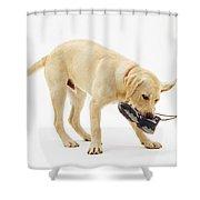 Labrador X Golden Retriever Puppy Shower Curtain