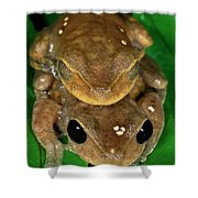 Lacelid Frog Nyctimystes Dayi Pair Shower Curtain