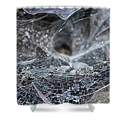 Lacey Lurker Shower Curtain