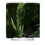 Lacy Wild Alabama Fern Shower Curtain
