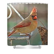 Lady Cardinal With Her Crown On Shower Curtain