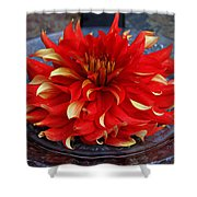 Lady In Red II Shower Curtain