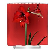 Lady In Red Shower Curtain