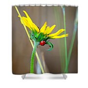 Lady In The Sun Shower Curtain