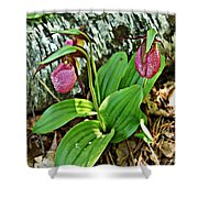 Lady Slipper I Shower Curtain