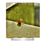 Lady What    Failed Luck  Shower Curtain