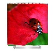 Ladybird On Petal Shower Curtain