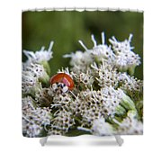 Ladybug Atop The Flowers Shower Curtain