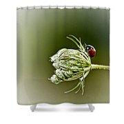 Ladybug Ladybug Fly Away Home Shower Curtain