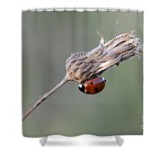 Ladybug On Dried Thistle Shower Curtain