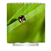 Ladybug With Black-brown And Red Color Shower Curtain