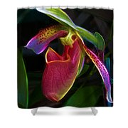 Lady's Slipper Shower Curtain by Judi Bagwell