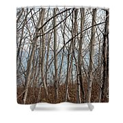Lake Beyond The Trees Shower Curtain