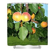 Lake Country Apricots Shower Curtain