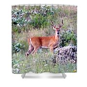 Lake Country Buck Shower Curtain