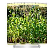Lake Country Corn Shower Curtain
