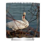 Lake Ontario Swan Shower Curtain