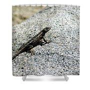 Lake Tahoe Lizard On A Hot Rock Shower Curtain