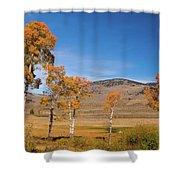 Lamar Valley Aspens Shower Curtain