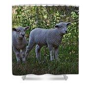 Lambs Shower Curtain