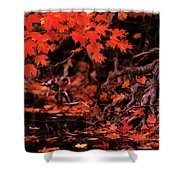 Land Of The Maple Shower Curtain