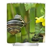 Land Snail 5698 Shower Curtain