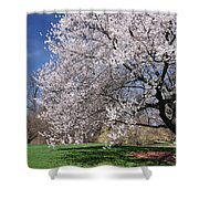 landscape 3 Sprawling Apple Tree in Spring Shower Curtain