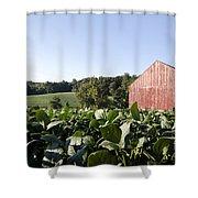Landscape Soybean Field In Morning Sun Shower Curtain