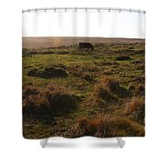 Landscape With Cow Grazing In The Field . 7d9935 Shower Curtain